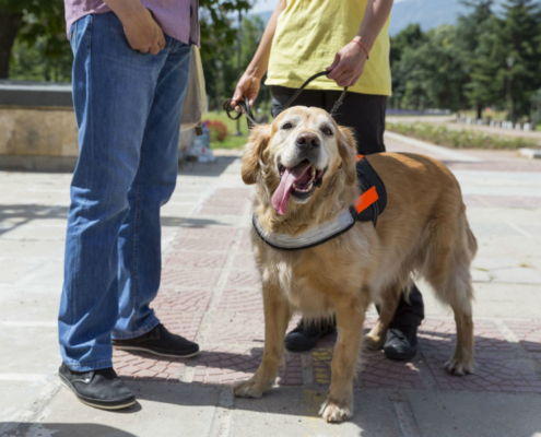 Registering a Service Dog