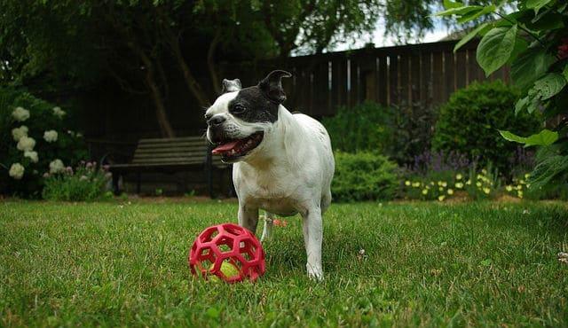 Dog in the backyard