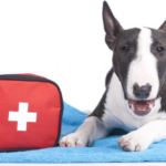Doggy First Aid Kit