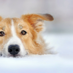 Dog dangers in winter